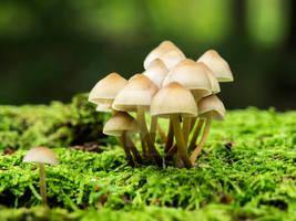 Mushyrooms