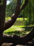 Longwood Gardens 13