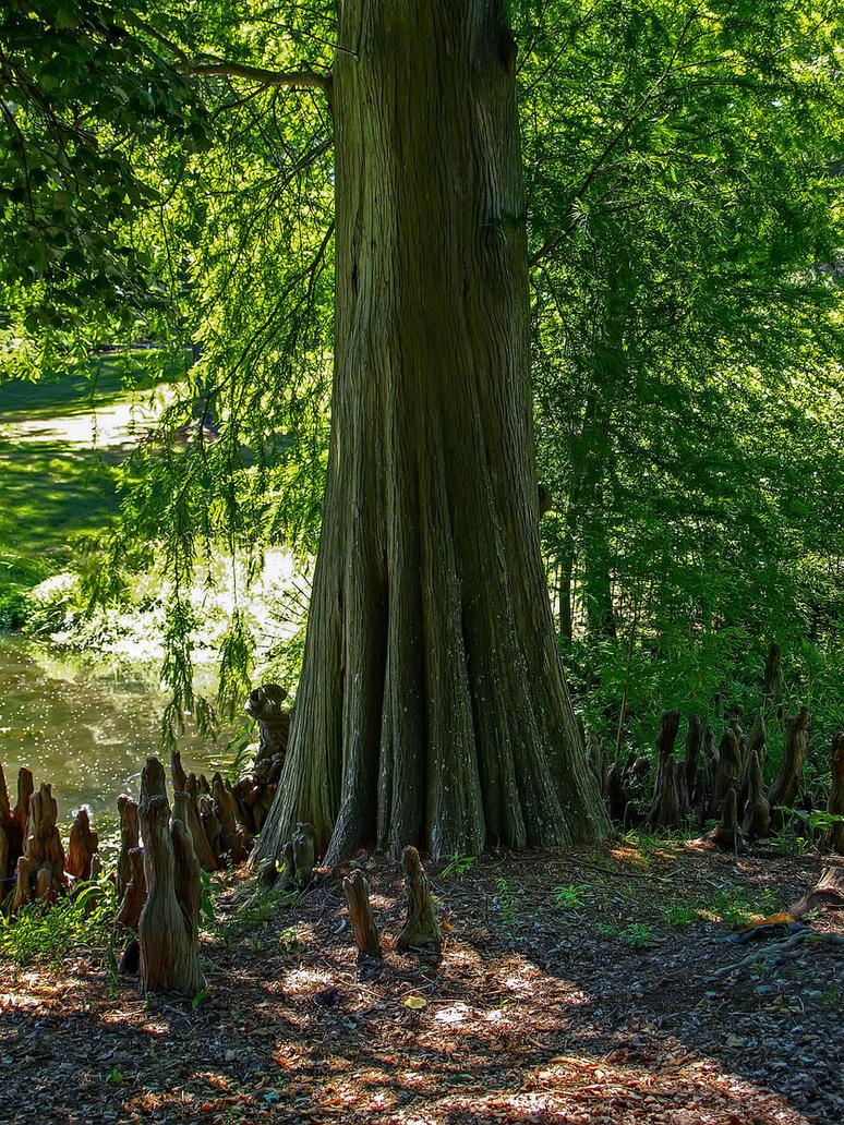 Longwood Gardens 16 by Dracoart-Stock