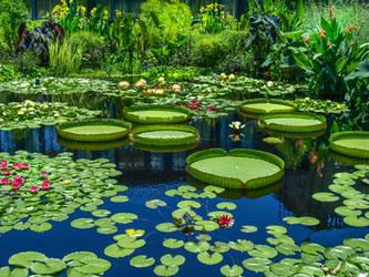 Longwood Gardens 42 by Dracoart-Stock