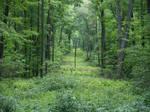 Hall of Trees