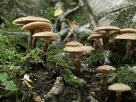 Mushrooms 4 by Dracoart-Stock