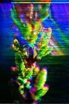 Sublimation by praseodym