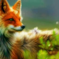 Foxanne