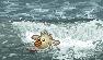 surfin bird by Krissi001