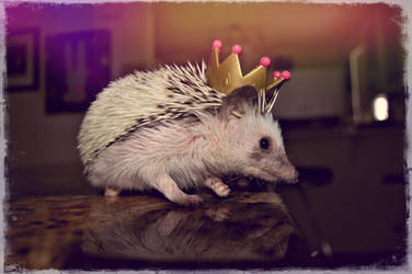 King of The Hedgies by soldierofsolace