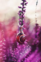 Coloursnail. by Hersmallworld