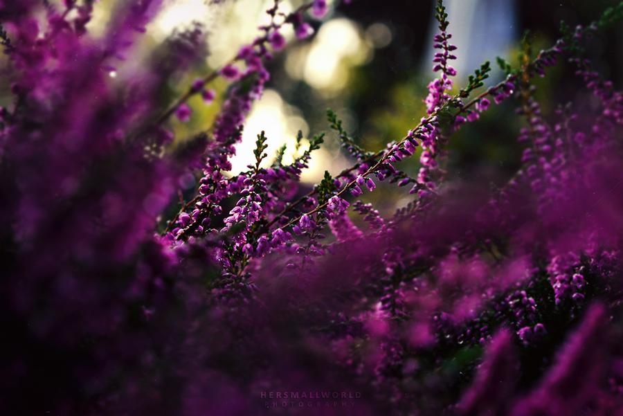 Heathpower. by Hersmallworld