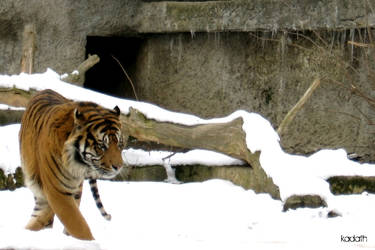 snow patrol by k-a-d-a-t-h