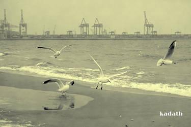 The Gulls of Stogi Beach by k-a-d-a-t-h