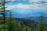 The Radziejowa Trail II