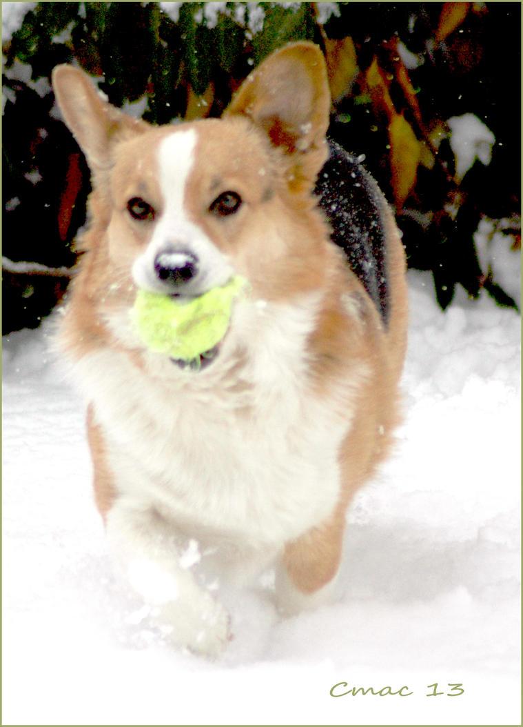 Snow Ball by Cmac13