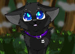Scourge (warrior cats)