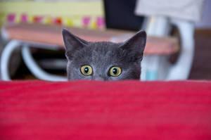 The stare. by kristina-bc