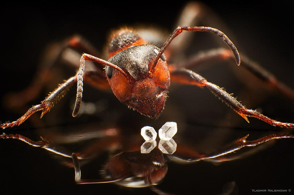 Ant 2 by Nalby1981