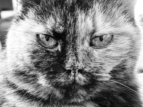 My cat Anfisa