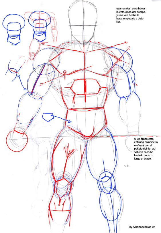 Anatomia de Dragon Ball by albertocubatas on DeviantArt