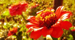 .A Flower
