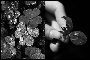 Clover II by Malleni