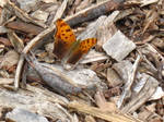 Butterfly Among the Wood Chips
