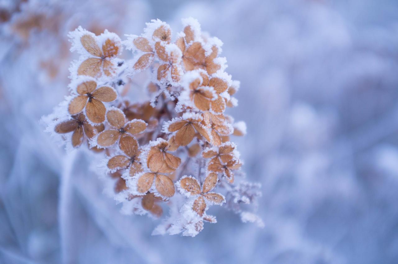 Winter flower by Itsiko on DeviantArt