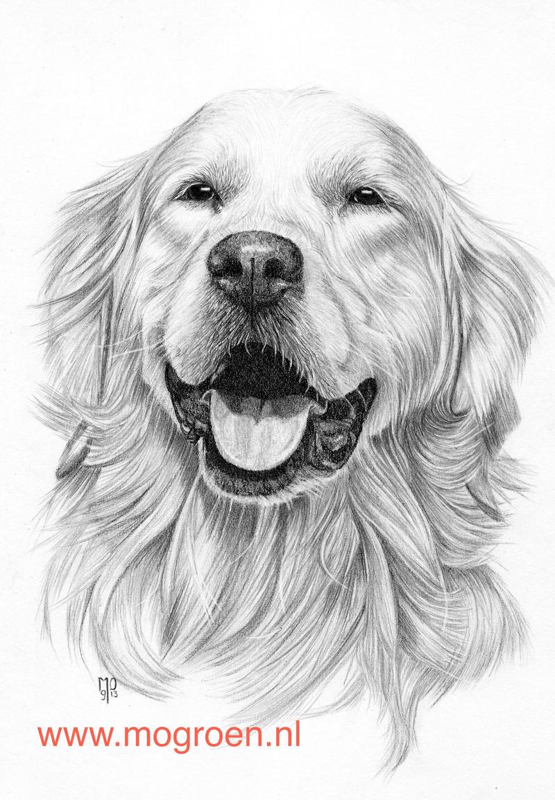 Line Drawing Golden Retriever : Drawing golden retriever by mo on deviantart
