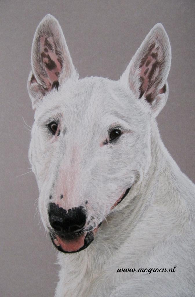 Drawing Bull Terrier in Pastel by mo62