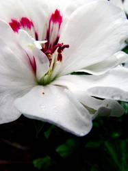 white beauty. by Gedankenmutistin