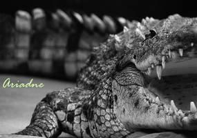 Croc by RossoCorvino