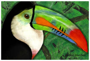 Toucan 2 by 9-Silver-Shadow-2
