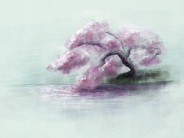 Cherry blossoms on water