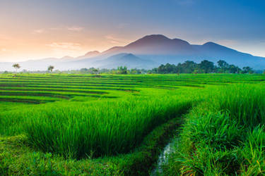 Indonesian natural beauty with a view of green
