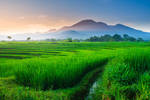 Indonesian natural beauty with a view of green by rahmadhimawan