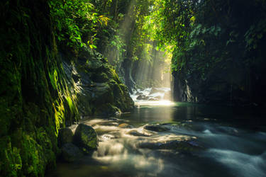 photos of natural landscapes and tropical forests