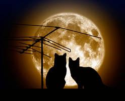 Love cats by Volodina-Yulia