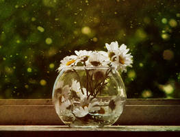 still life with camomiles by Volodina-Yulia