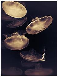 Timeless Jellyfish