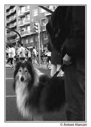 Gos i marato by nenet