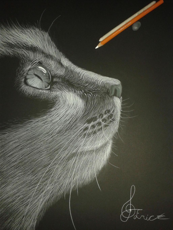 Gato blanco y negro by Bluemacawboss on DeviantArt