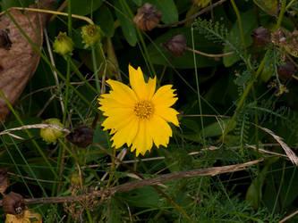 Morning Flower by eRe4s3r