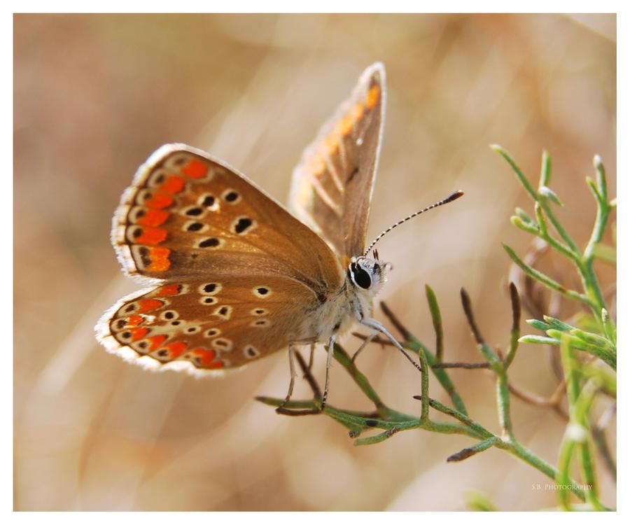 Butterfly macro 7 by selley