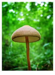 Mushroom macro 2 by selley