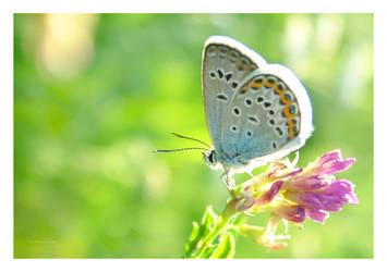 Butterfly macro 8 by selley
