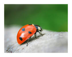 Ladybug macro by selley