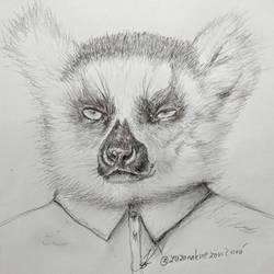 Mr.Lemur
