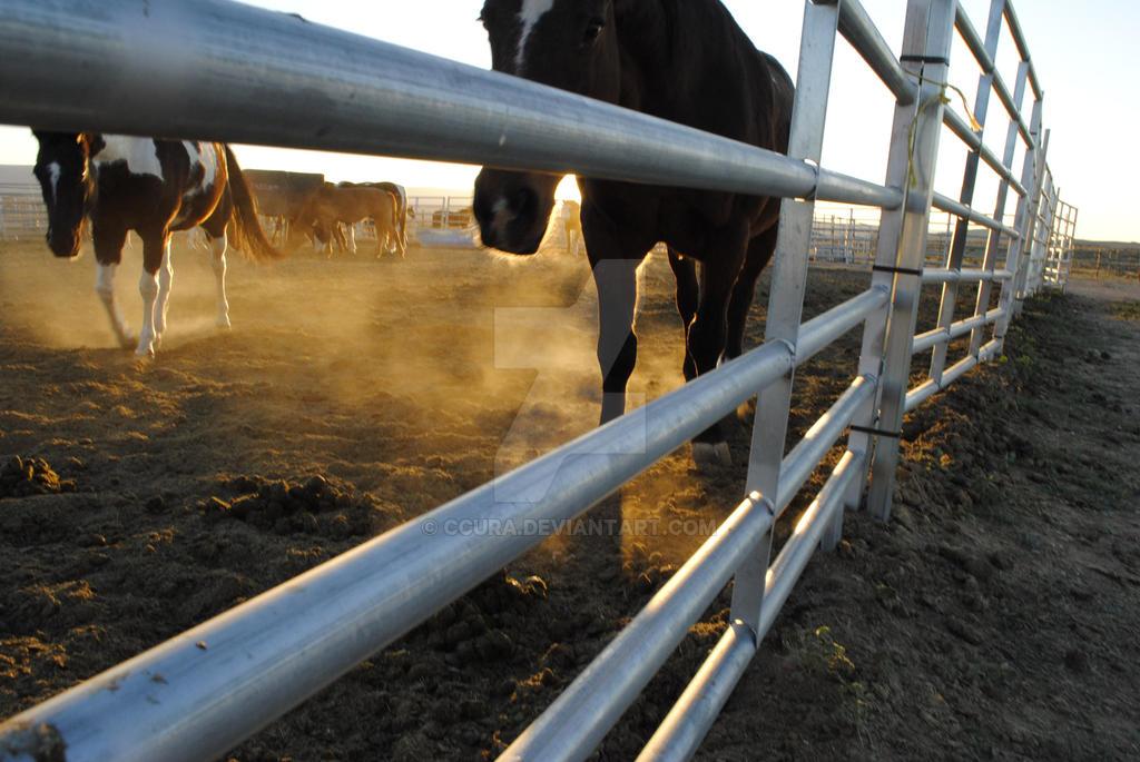 Equestrian Dawn by ccura