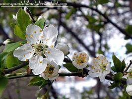 I miss U spring by yamixhikari