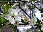 I miss U spring