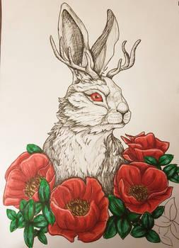 Poppy Jackalope