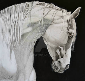 Andalusian-horse 2-3-19